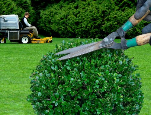 Checklist for Yard Maintenance