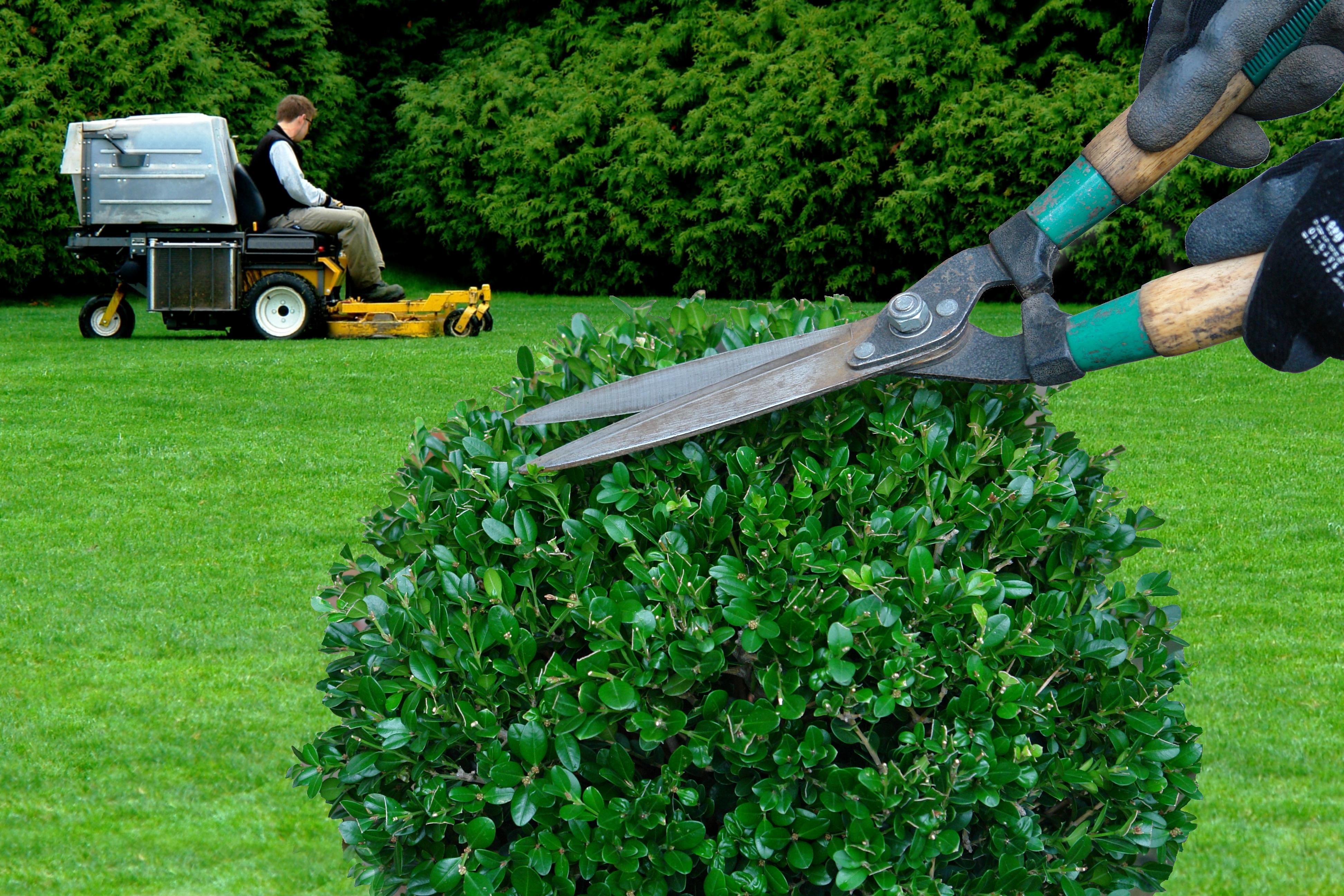 Checklist for Yard Maintenance